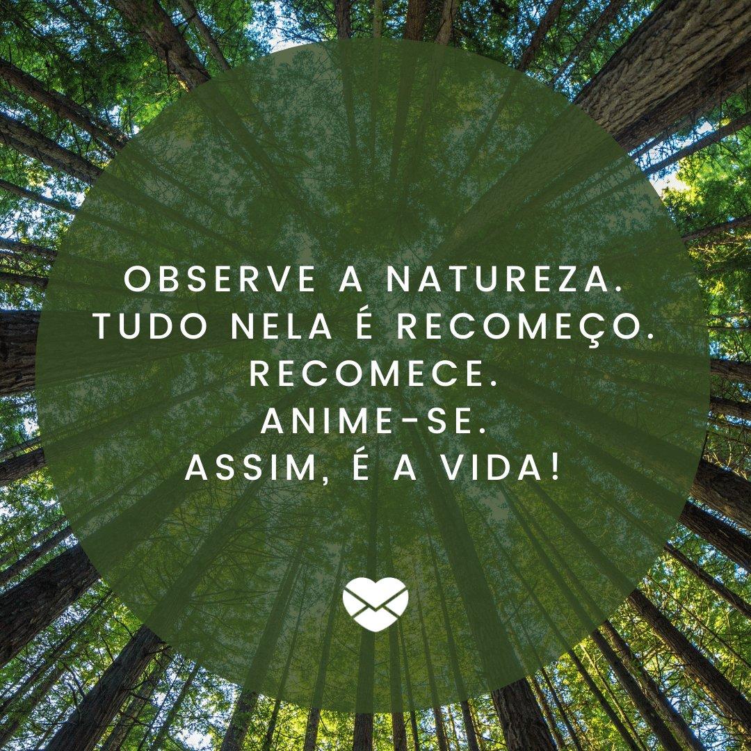 'Observe a natureza. Tudo nela é recomeço (...)' - Mensagens de Otimismo