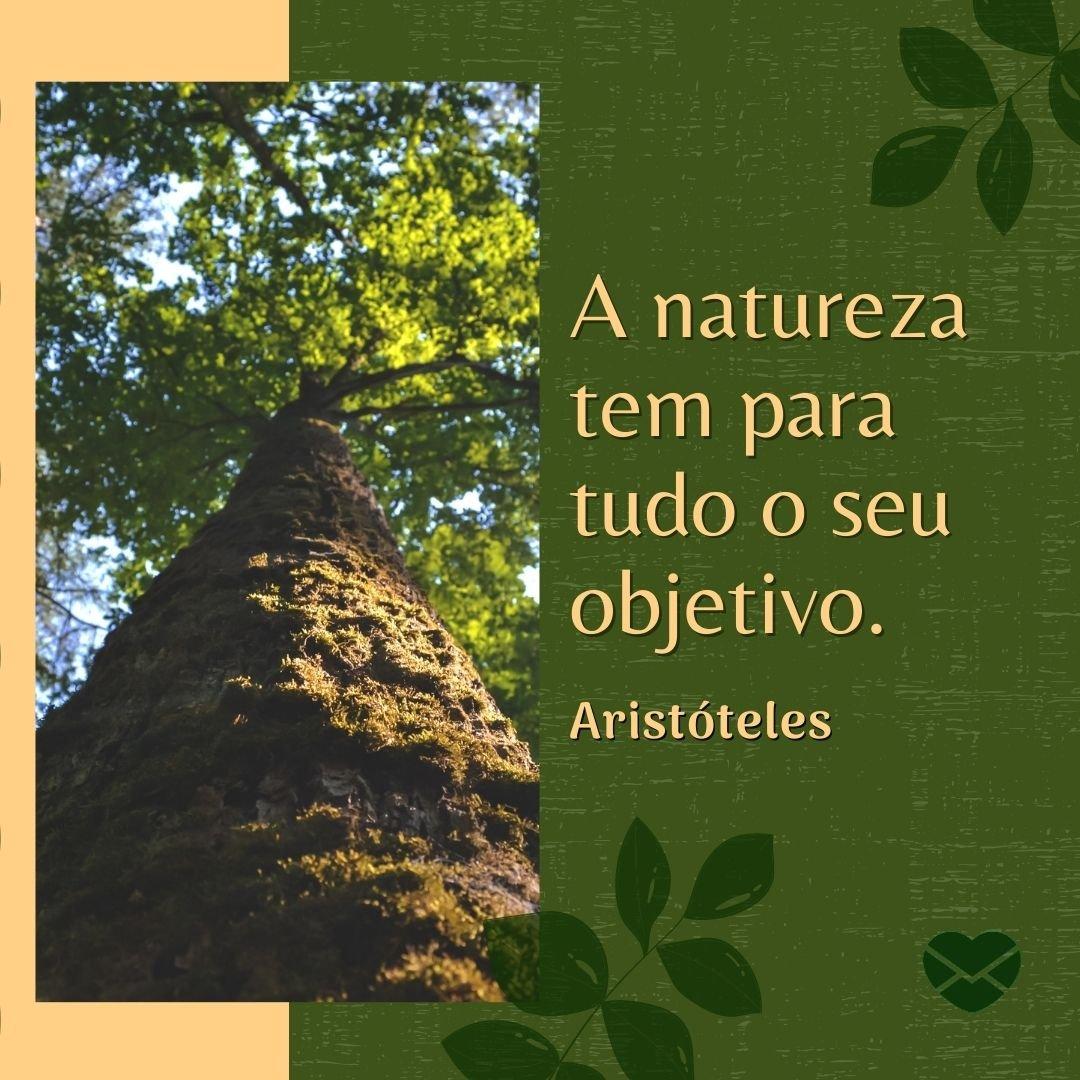 'A natureza tem para tudo o seu objetivo.' - Frases sobre Natureza