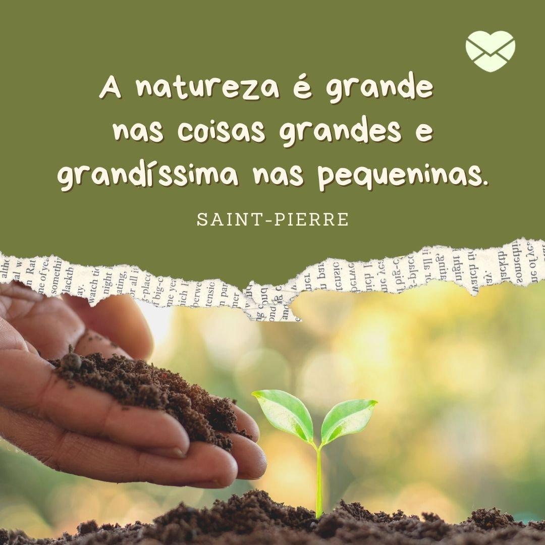 'A natureza é grande nas coisas grandes e grandíssima nas pequeninas' - Frases sobre Natureza