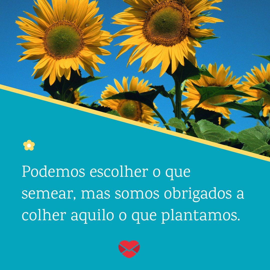 'Podemos escolher o que semear, mas somos obrigados a colher aquilo o que plantamos.' - Frases Bonitas