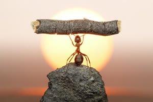 Frases De Conquista Luta E Determinação