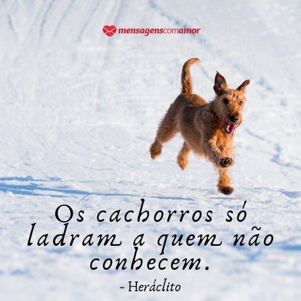 Ladram Frases De Cachorro Animais