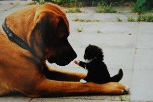 Frases De Animais De Estimação Os Nossos Melhores Amigos