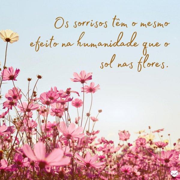 'Os sorrisos têm o mesmo efeito na humanidade que o sol nas flores.' - Frases de Sorriso