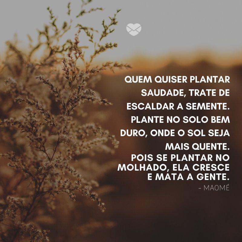 'Quem quiser plantar saudade, trate de escaldar a semente. Plante no solo bem duro, onde o Sol seja mais quente. Pois se plantar no molhado, ela cresce e mata a gente.' -Frases de Sol