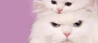 Gatos Fofos Para Deixar Sua Vida Mais Bonita