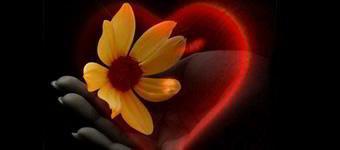 Frases De Amor Proibido Os Sentimentos Escondidos No Ar