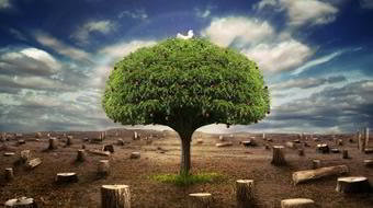 Frases Sobre Sustentabilidade Vamos Conservar O Planeta
