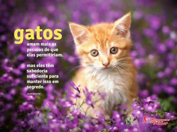 Frases De Gatos Uma Pagina Cheia De Fofura