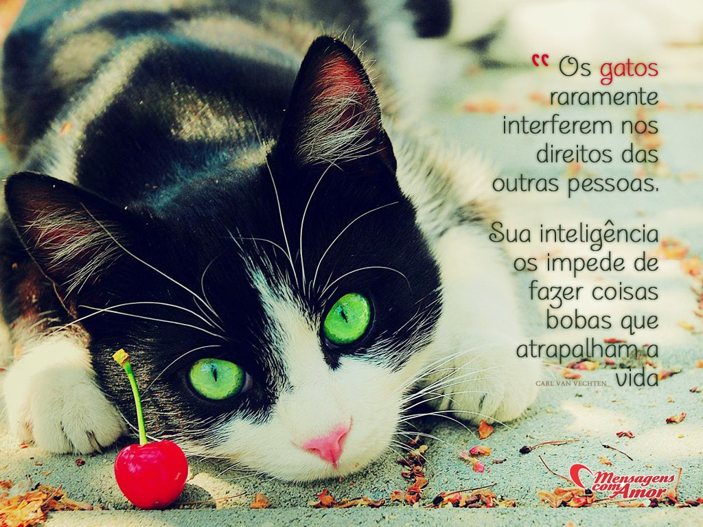 Frases Com Animais De Estimação Para Facebook: Inteligência