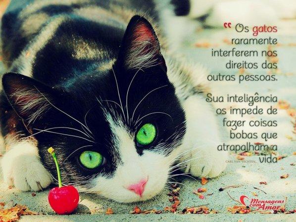 Frases De Gatos Uma Página Cheia De Fofura