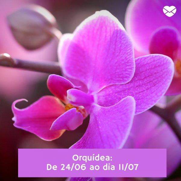 'Orquídea' - Horóscopo das Flores