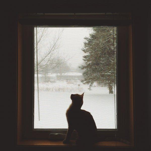 Gato sentado na janela olhando para cima