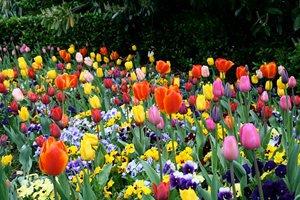 Mensagens De Flores Deixe Seu Dia Mais Florido