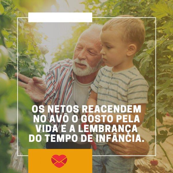 'Os netos reacendem no avô o gosto pela vida e a lembrança do tempo de infância.' - Amo meu Avô