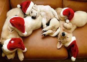 Boas Festas - Clássicos Natalinos - Natal