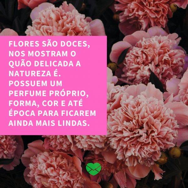 'Flores são doces, nos mostram o quão delicada a natureza é. Possuem um perfume próprio, forma, cor e até época para ficarem ainda mais lindas.' - 20 frases sobre amar a natureza