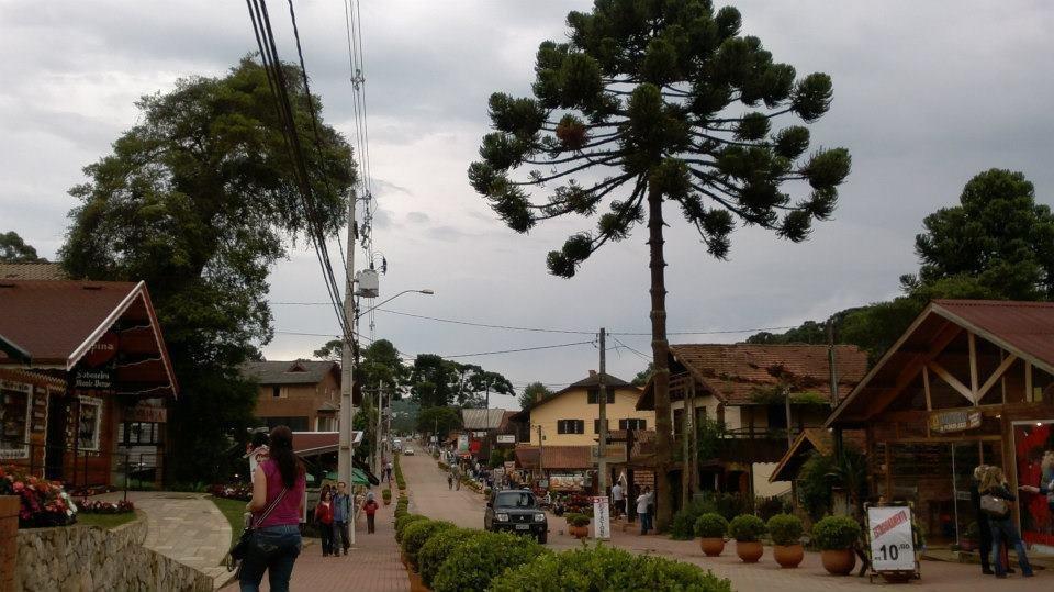 Araucária no centro de Monte Verde em Minas Gerais
