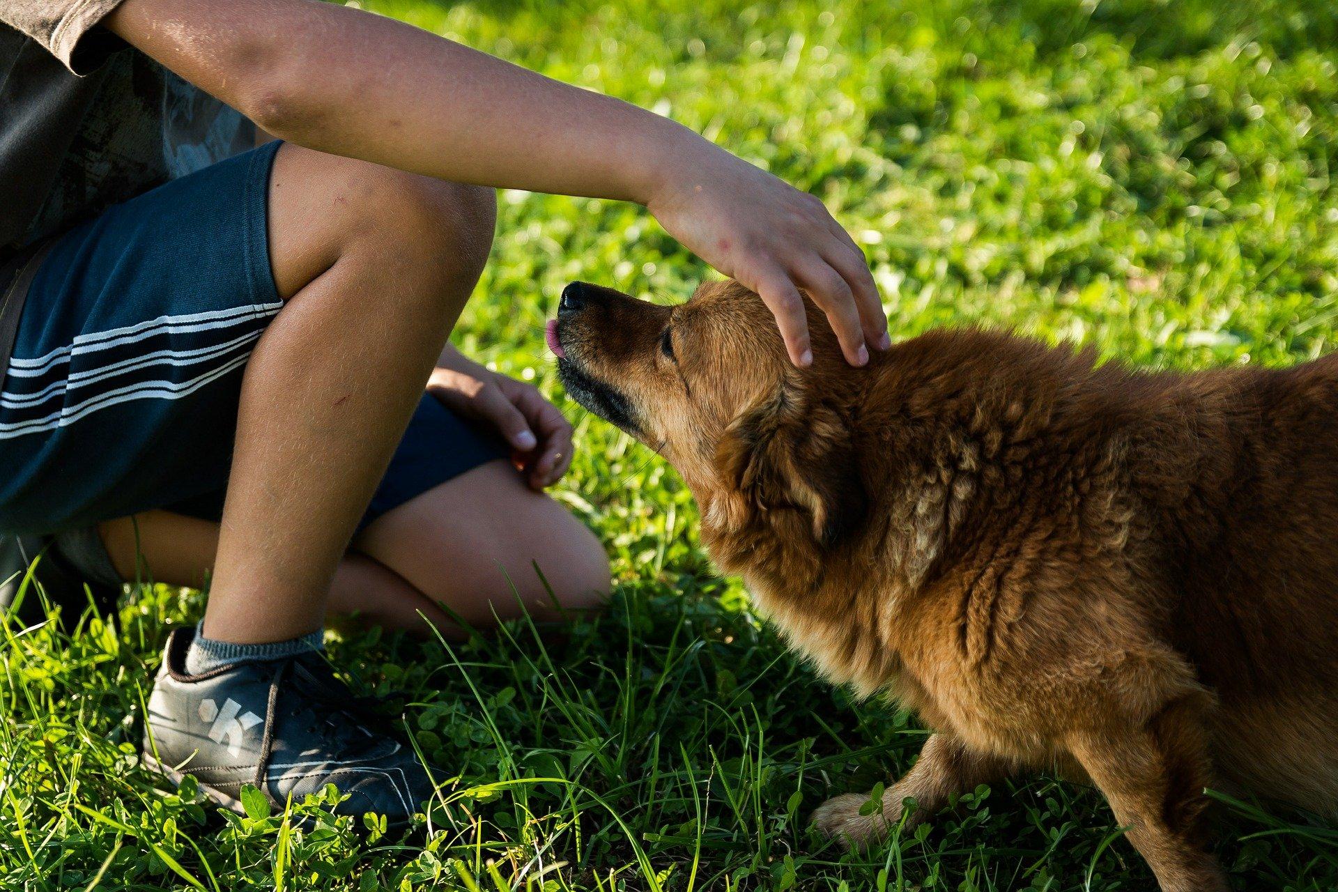 Criança passando a mão em cachorro