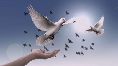 Frases De Paz Respire E Contemple