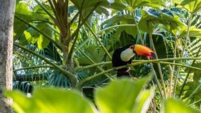 Vista aérea de floresta, com as copas das árvores se misturando, sem deixar espaços.