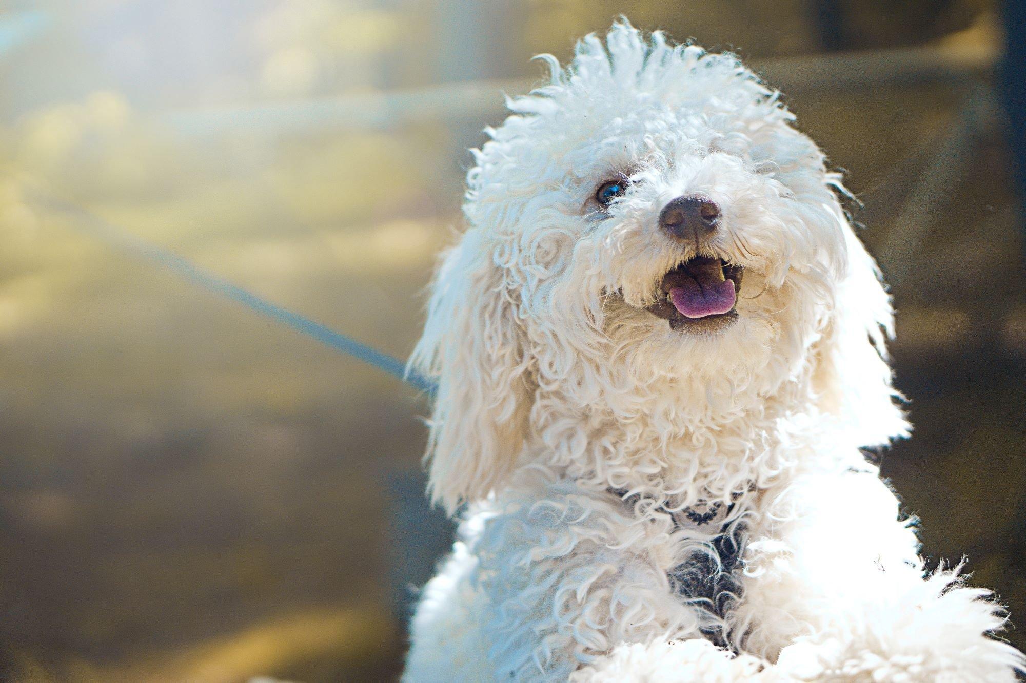 Frases De Cachorro O C 227 O 233 O Melhor Amigo Do Homem