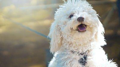 Frases De Cachorro Que Provam O Poder De Seu Afeto