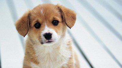 Mensagens De Cachorro O Melhor Amigo Do Homem