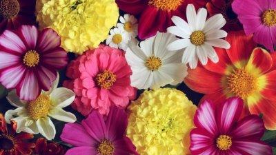 Frases De Flores Para Fazer Desabrochar A Felicidade