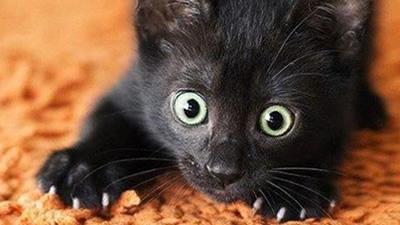 Gatos Engraçados Para Rir Chorar E Amar