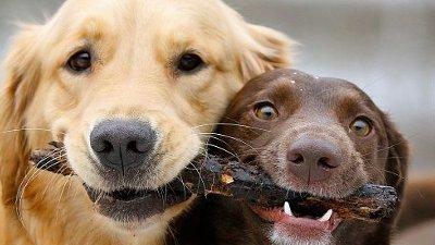 Cachorros Engraçados Fofos E Hilários