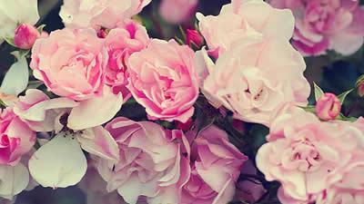 Frases Para Madrinhas Nossas Verdadeiras Flores