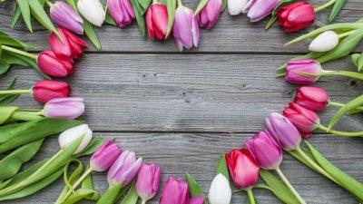Mesa de madeira com várias tulipas organizadas em formato de coração.