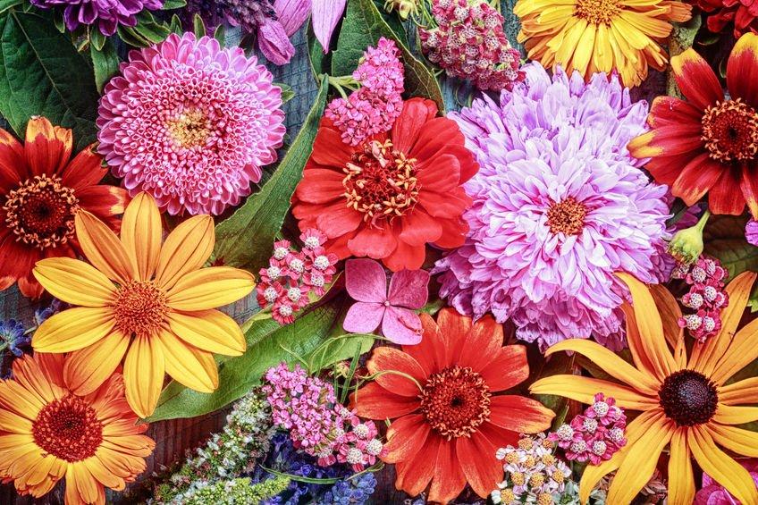 Hor 243 Scopo Das Flores Encontre A Sua Flor