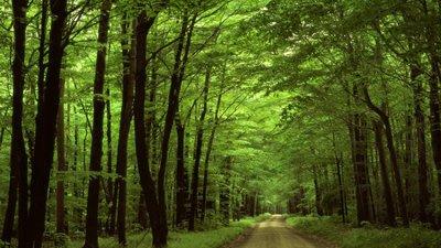 Frases Sobre Floresta A Riqueza Da Natureza