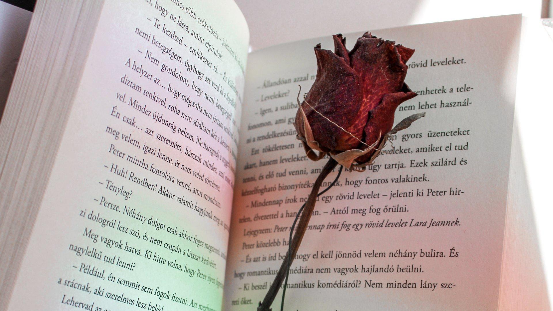 Livro aberto com uma rosa no meio