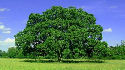 Frases Sobre Dia Da árvore Preservando A Natureza