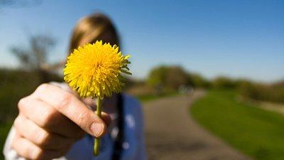 Flor dente-de-leão no foco com mulher atrás segurando