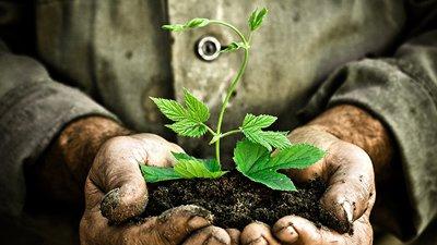 Frases Sobre Preservação Proteja O Meio Ambiente