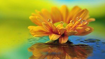 Frases De Vida E Reflexão Mais Luz Amor E Positividade