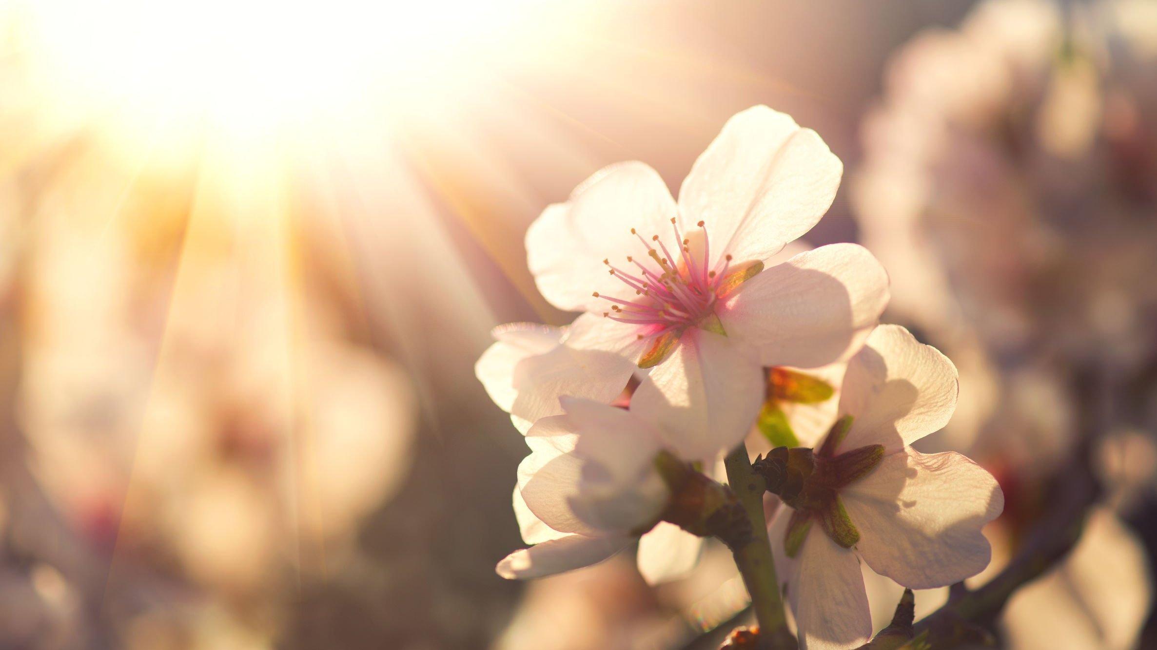 Flores iluminadas pelo sol  em um campo