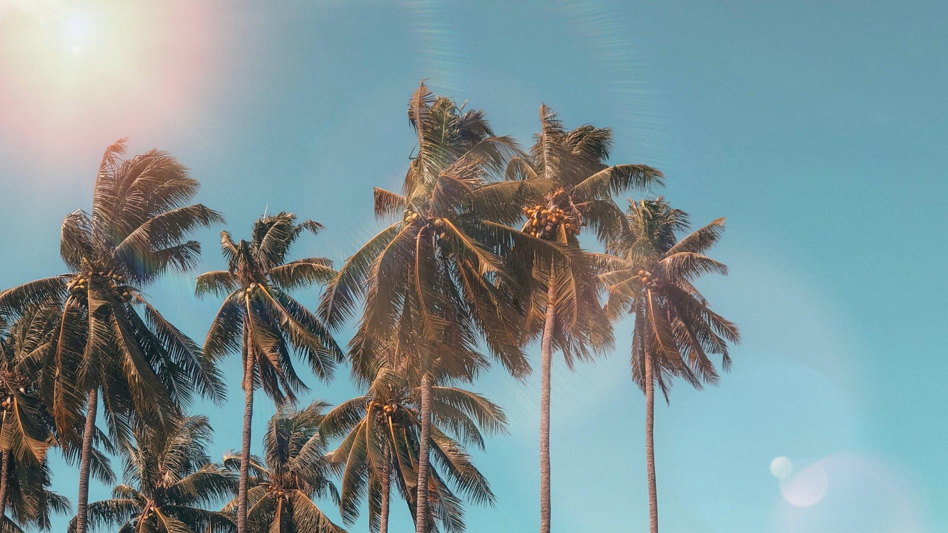 Foto de um céu azul ensolarado com coqueiros