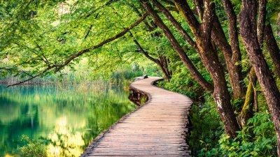 Ponte de madeira sobre lago, cercado por árvores.