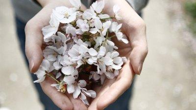 Pessoa oferecendo flores que segura nas palmas das duas mãos.
