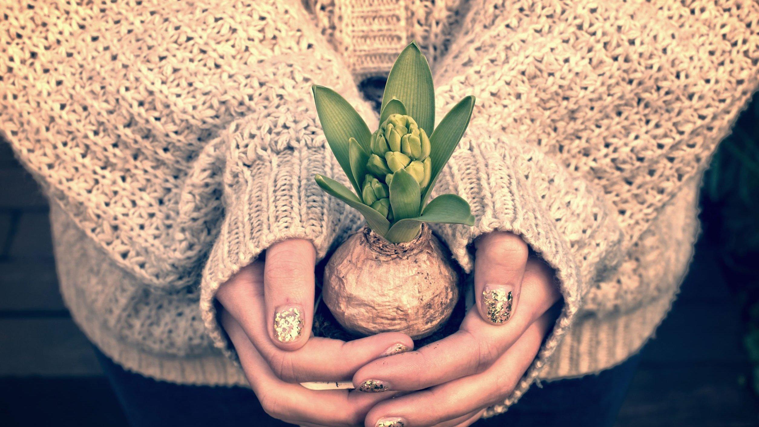 Mãos de mulher jovem segurando um pequeno vaso de planta