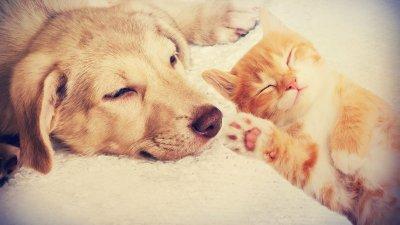 Um cachorro e um gato deitados juntos, dormindo.