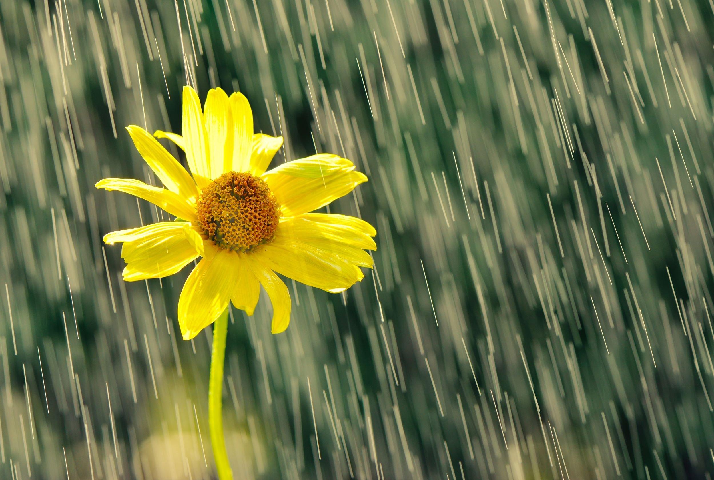 Flores 231 A Mesmo Na Chuva Os Obst 225 Culos Te Ajudam A Crescer