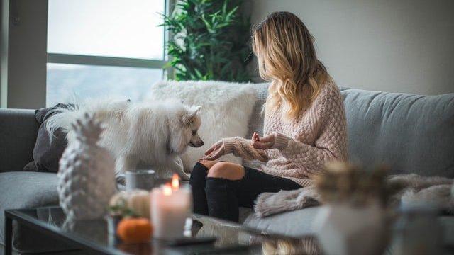 Mulher sentada em sofá em uma sala, com um cachorro pequeno prestes a subir em seu colo.