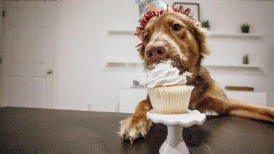 Mensagens De Aniversário Para O Cachorro Um Amor Eterno