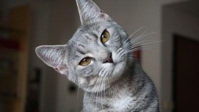 Declarações De Amor Para O Gato Seu Coração Tomado Por Um